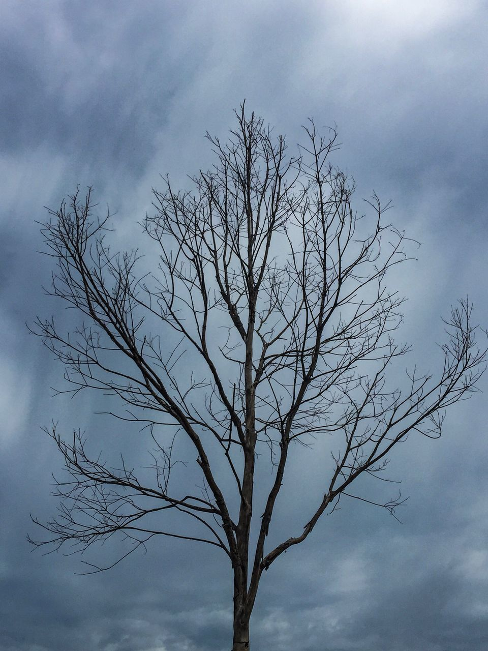 sky, tree, branch, bare tree, nature, tranquility, low angle view, beauty in nature, outdoors, lone, no people, day