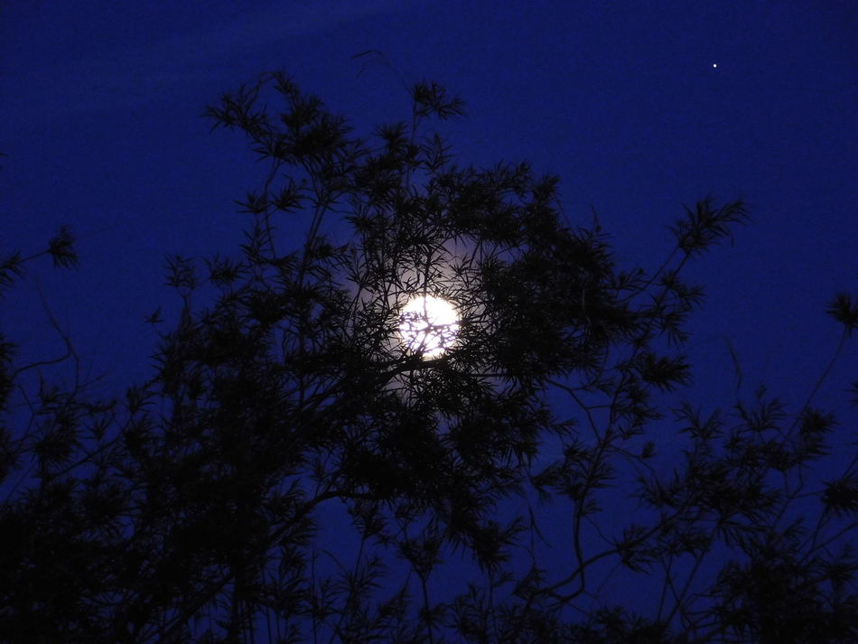 Moon Tree Silhouette Sky Nature Beauty In Nature Low Angle View Night No People Tranquility Outdoors Growth Treetop Branch Star - Space Astronomy