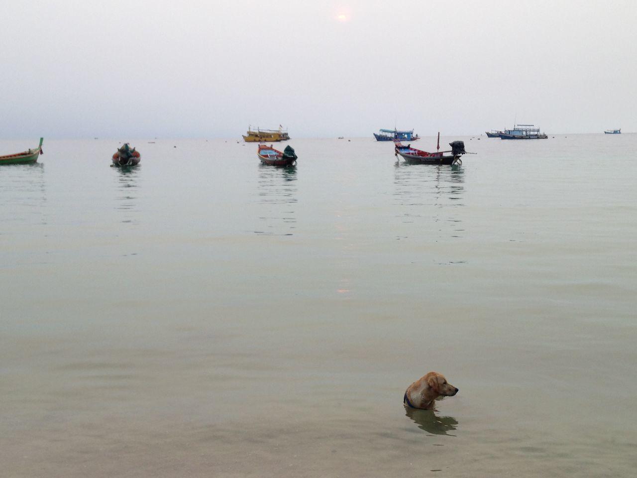 Hey human, I'm HOT !! Dog Beach Capture The Moment