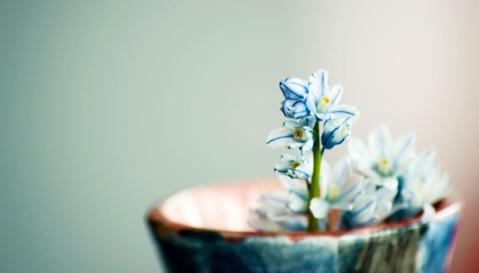 Tiny spring flowers in a child's vase closeup nature flower background Flower Vase Indoors  No People Close-up Fragility Nature Day Freshness Childhood Art Photography Card Copy Space Mothers Day Spring Small Floral Spring Flowers Art Is Everywhere Striped Squill Lily Springtime Siberian Squill - Scilla Siberica Lily April