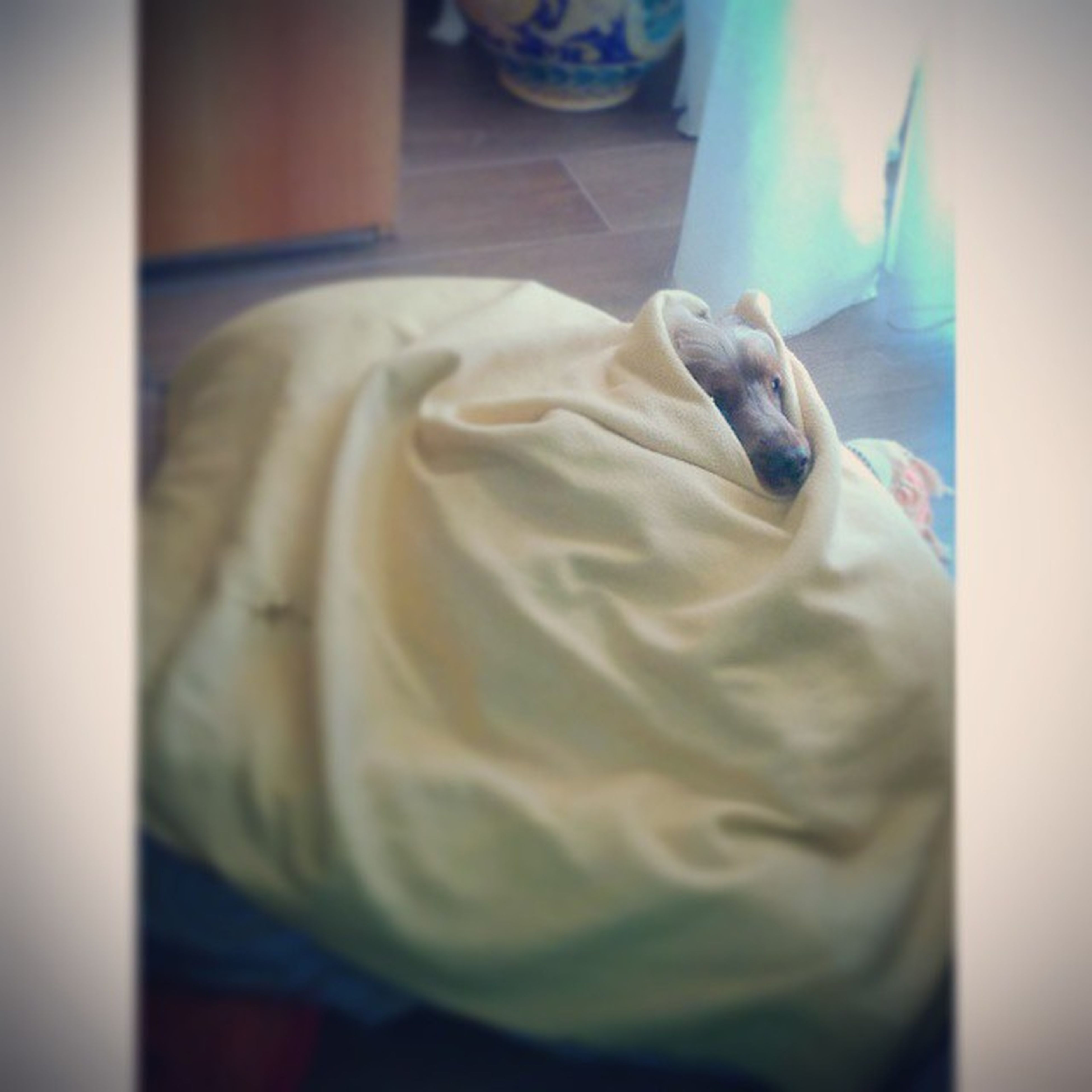 😘💗 ILY Layla Love Cute Puppy Cocker Dog Beautiful Like Follow Allcovered