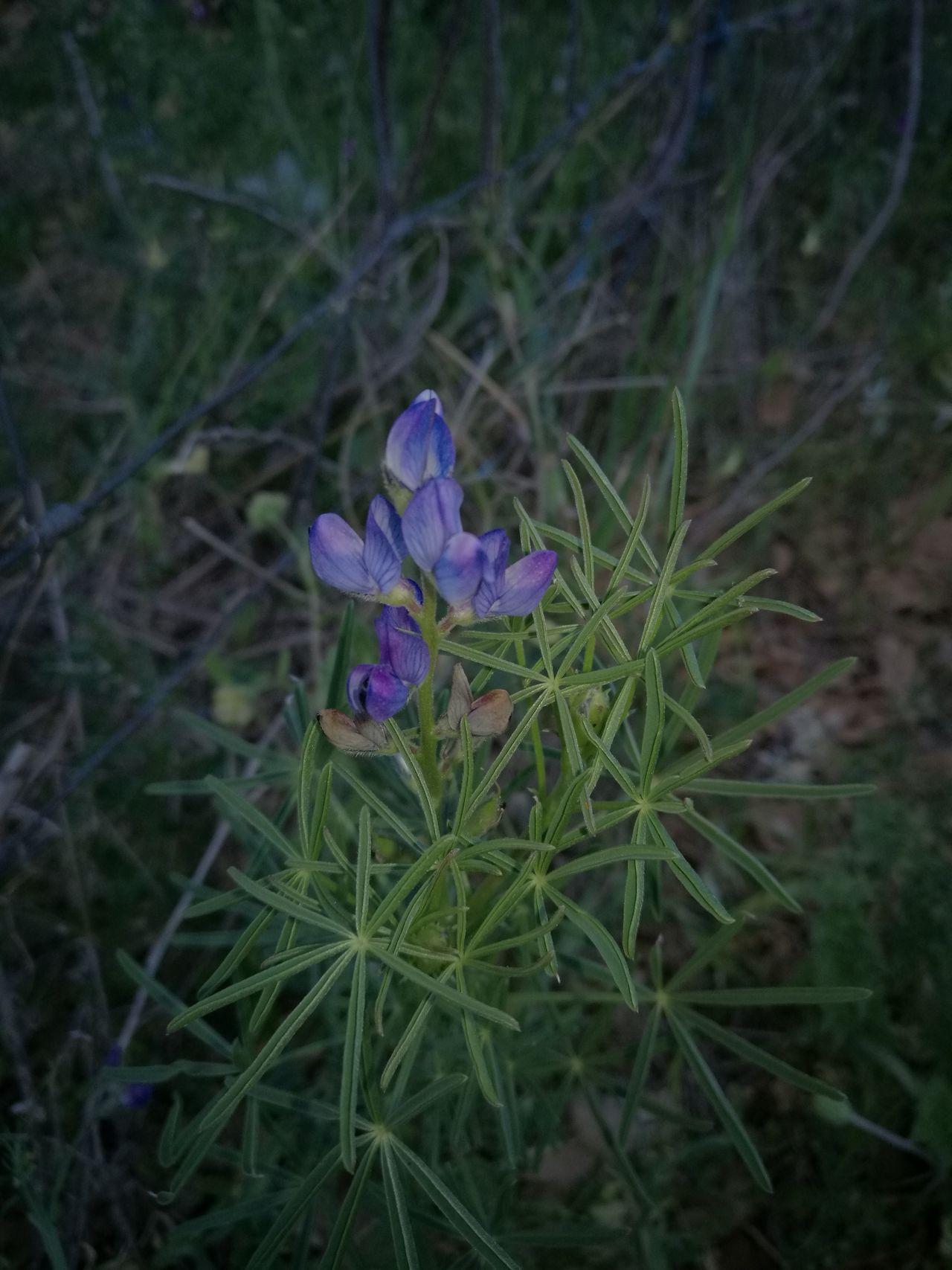 Colours Nature Photography Nature Sardinia,italy Colors Flowers Flowery Flower Nature Collection Naturephotography
