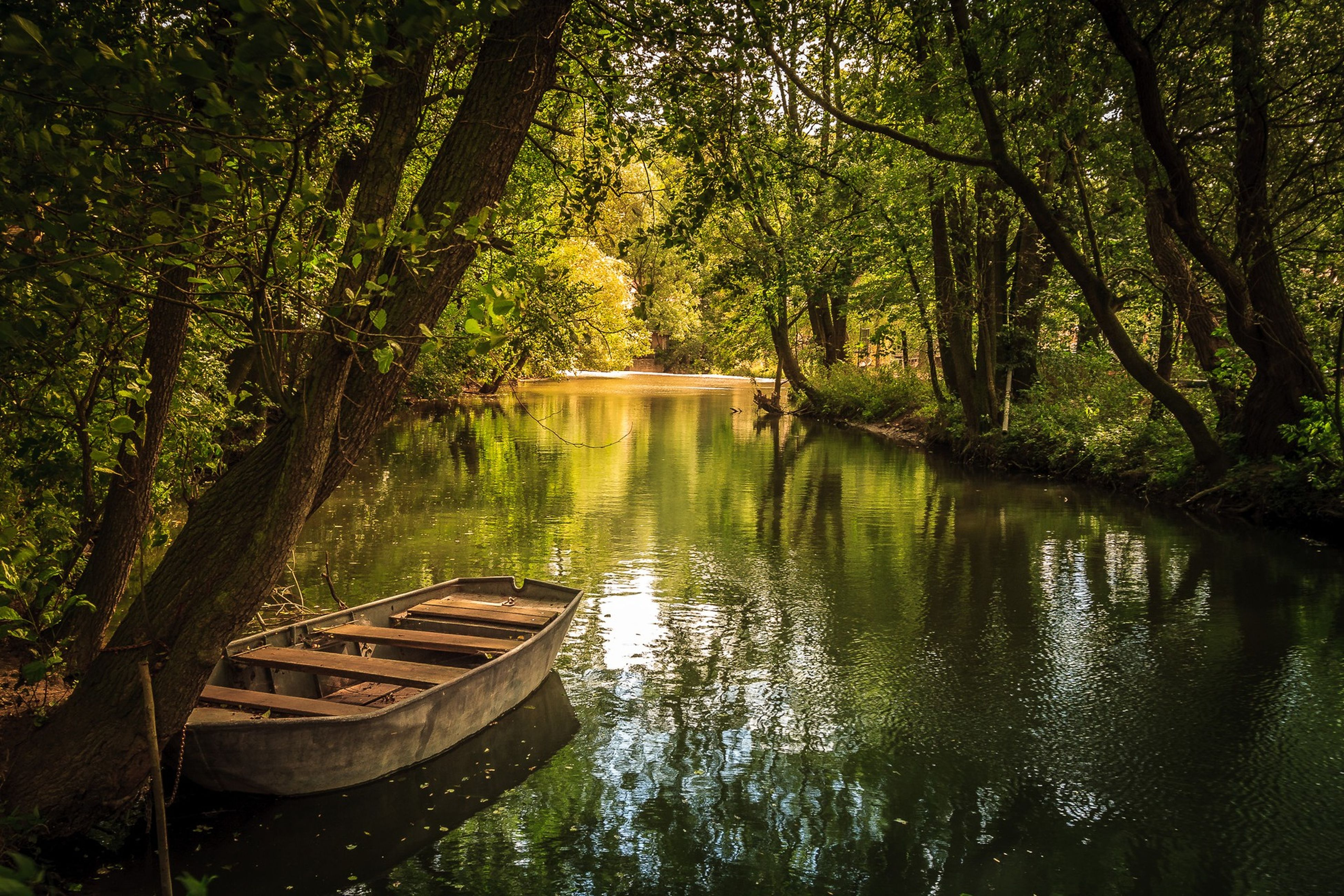 tree, water, tranquility, reflection, tranquil scene, nature, forest, beauty in nature, growth, lake, branch, scenics, green color, transportation, river, idyllic, day, outdoors, boat, nautical vessel