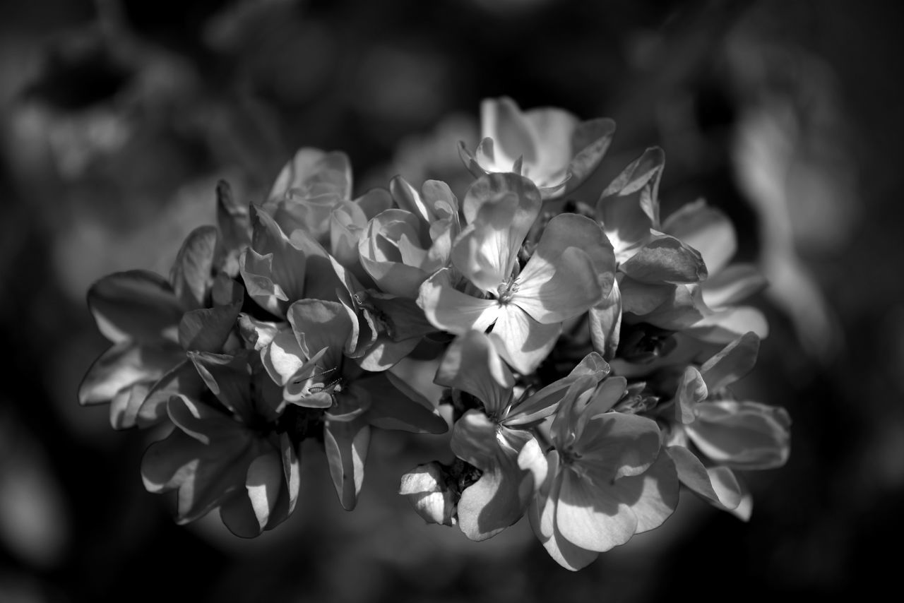 black beauty Beauty In Nature Blackandwhite Bw Bw_collection Bw_lover BW_photography Bws_worldwide Flower Flower Collection Flowerporn Noir Et Blanc