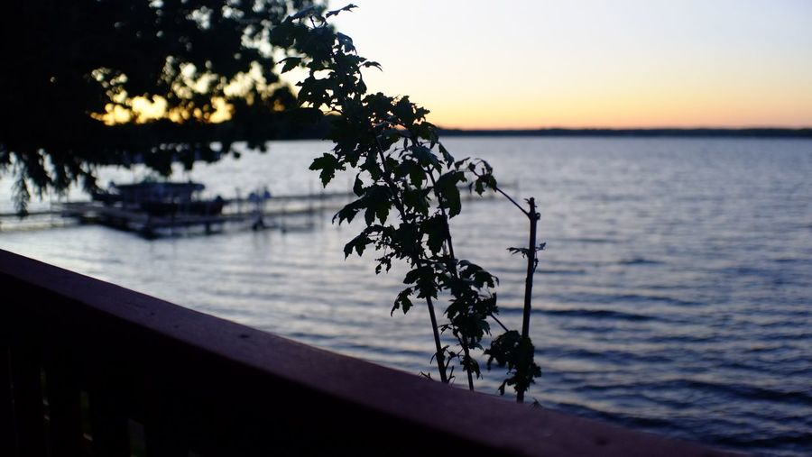 Fair Hills Resort Minnesota Beauty In Nature Close-up Day Growth Horizon Over Water Nature No People Outdoors Scenics Sea Sky Sunset Tranquil Scene Tranquility Tree Water