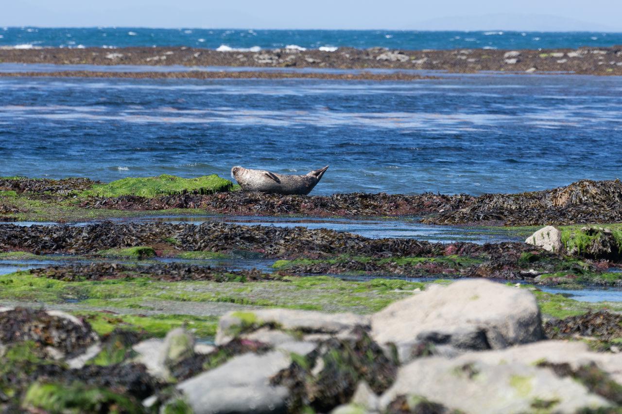 Animal Themes Animal Wildlife Animals In The Wild Beach Beauty In Nature Bird Day Ireland Mammal Nature No People One Animal Outdoors Scenics Sea Sky Water