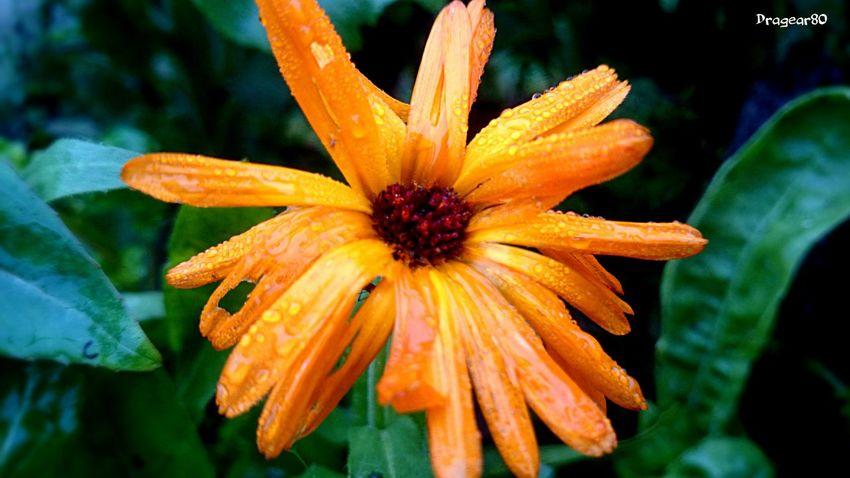 EyeEm Nature Lover Flowerporn EyeEm Best Shots Beautiful Colours....
