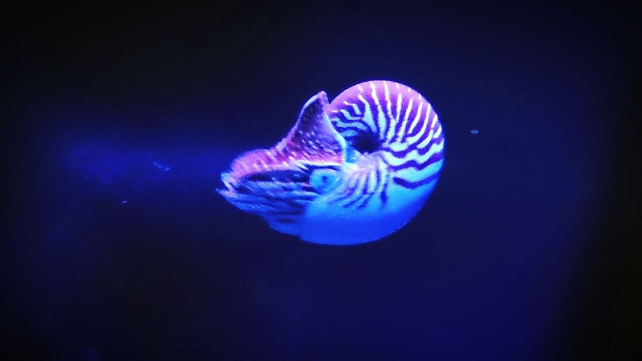 Aquarium Nautilus Beautiful Nature Fluo