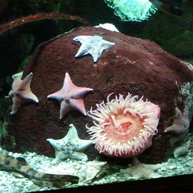 Sea Life Underwater UnderSea Water Animal Themes Aquarium Aquarium Life Niagara Falls NY Niagara Falls Multi Colored Starfish