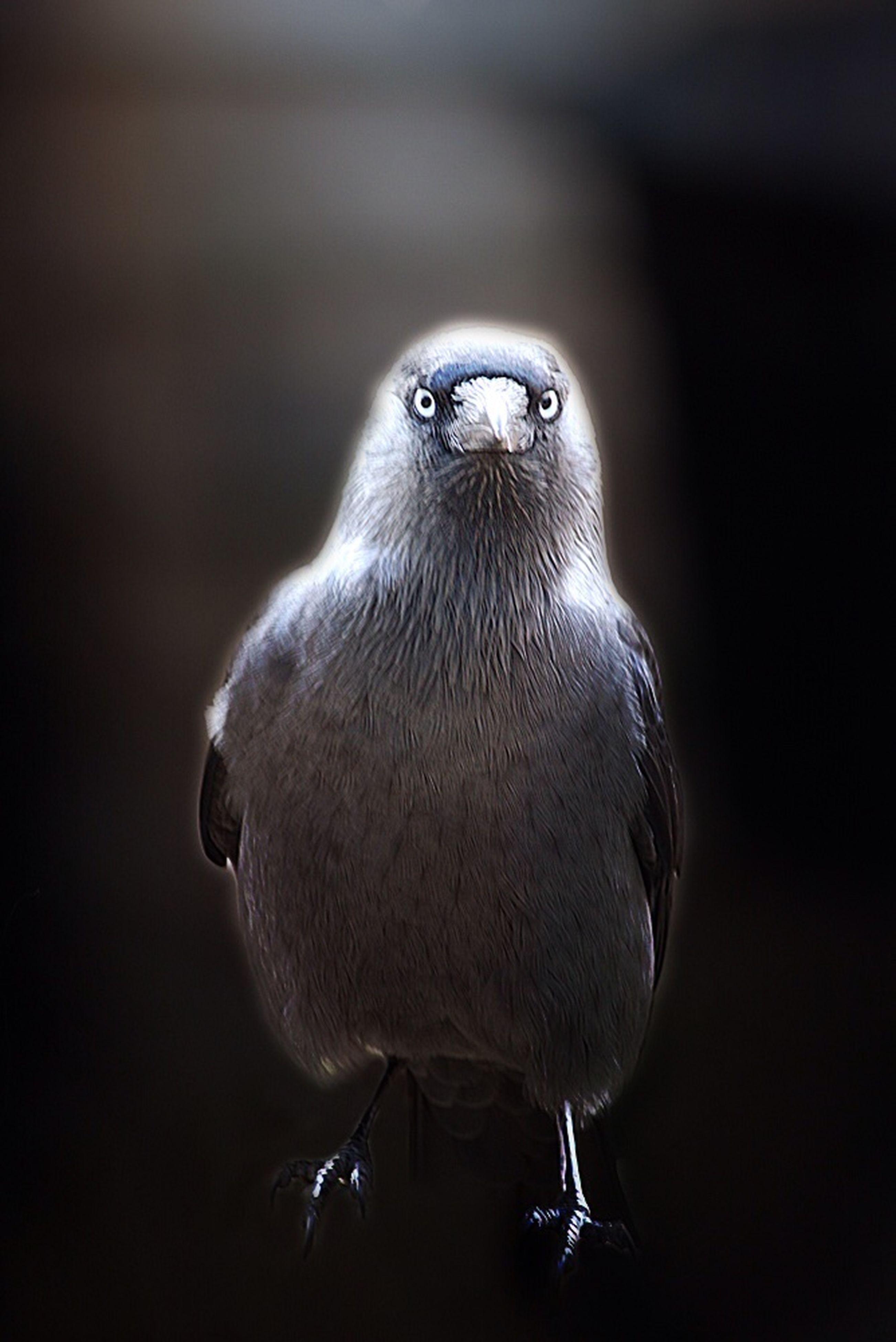 bird, one animal, animal themes, animals in the wild, animal wildlife, close-up, no people, perching, day, outdoors, nature