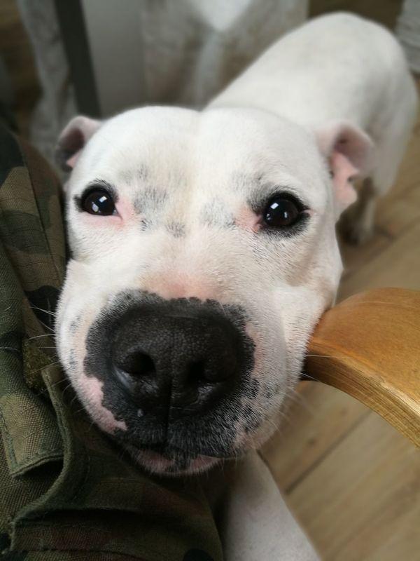 Caress Me Dog Italy🇮🇹 Benni Myfriend♥ Looking At Camera
