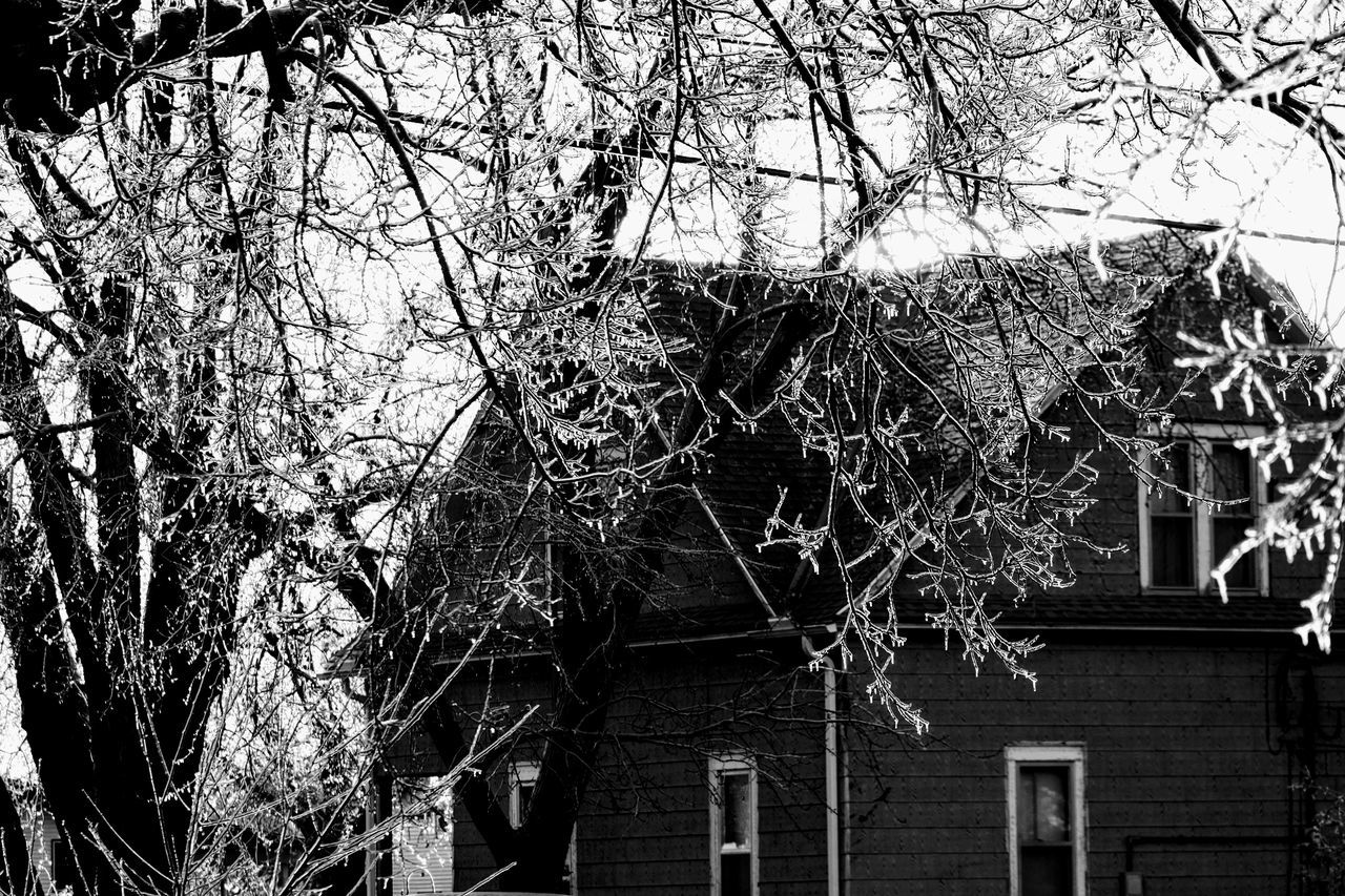 tree, branch, building exterior, architecture, built structure, outdoors, low angle view, day, no people, bare tree, ivy, nature, growth, sky