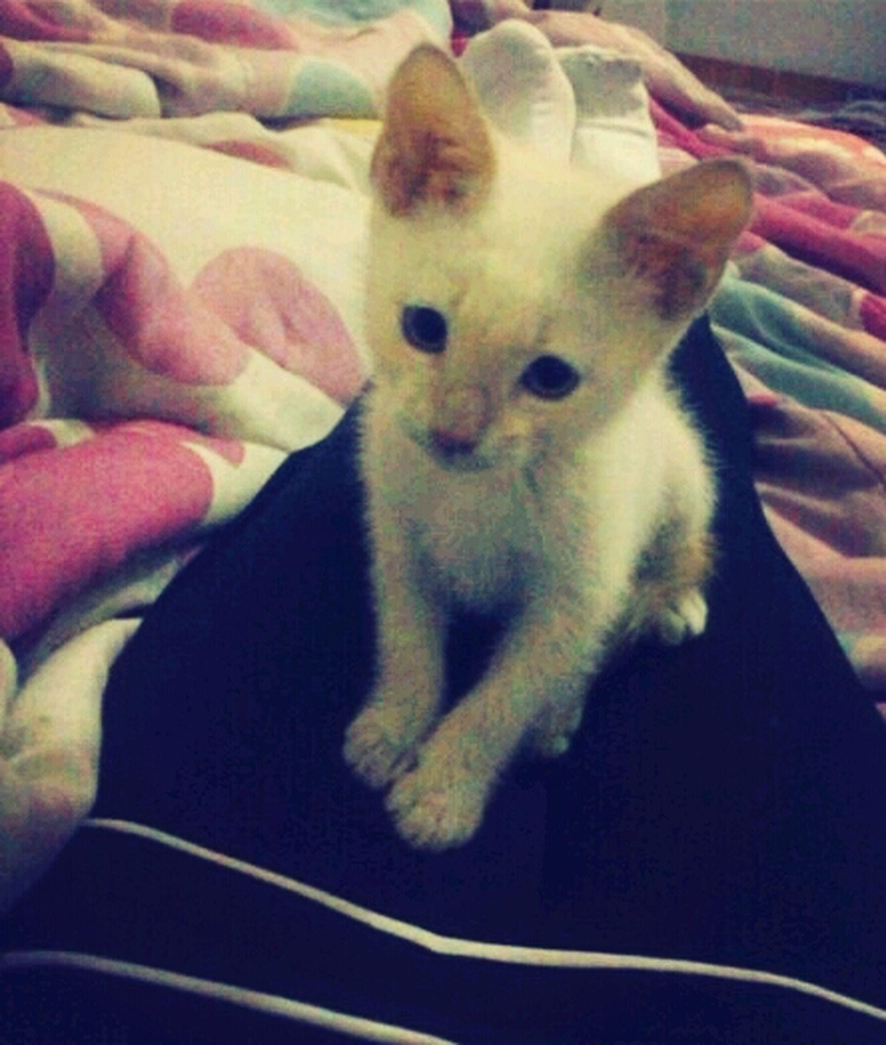chatinha de mamãe <3