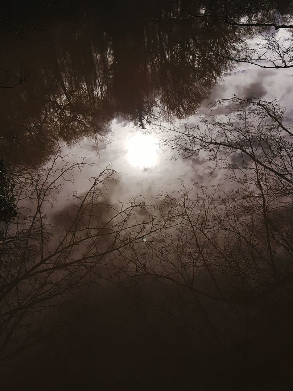 Nature Tree Beauty In Nature No People Tranquility Sun Scenics Sky Idyllic Outdoors Tranquil Scene Reflections Tree Reflection In Water Light And Water Scenic View