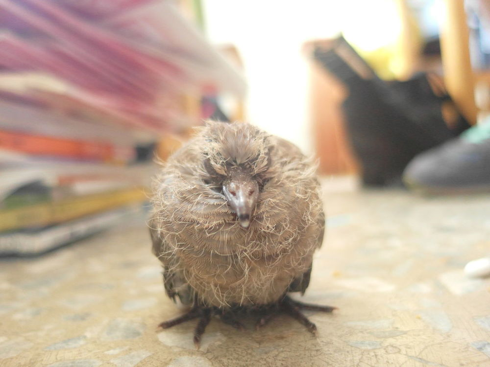 Animal Animal Hair Animal Head  Animal Themes Close-up Cute Day Focus On Foreground Mammal Nature No People Outdoors Portrait Relaxation Selective Focus Whisker Turtledove