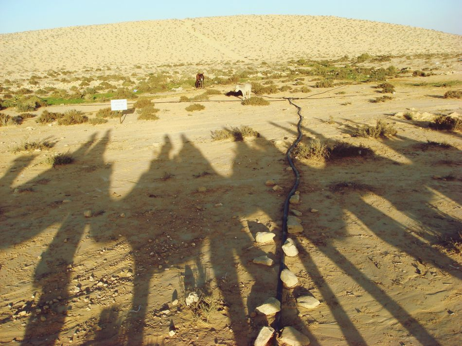 Shadows Camel Negev  Birthright Riding A Camel Middle East Deserts Around The World Desert Life Travel Photography Sand Shadow-art Silhouette Israel Bedouin