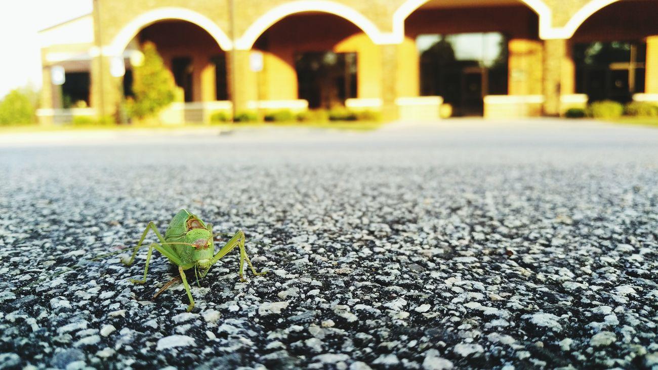 Nature Amature Loveletters Exploring Bug Outdoors