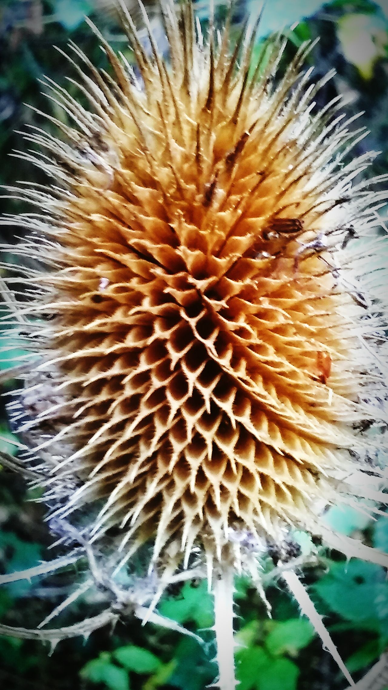 Flower Head Thorn Spiked Close-up Sharp Cactus Plant Growth Danger Nature Focus On Foreground RISK Beauty In Nature Single Flower Spiky Fragility Flower Flower Head Day Outdoors Botany