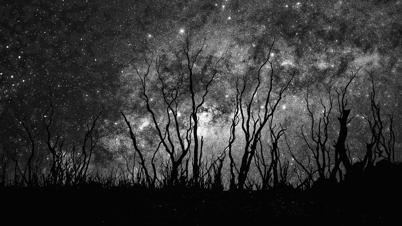 Backgrounds Nature No People Night Low Angle View Outdoors Full Frame Tree Beauty In Nature Scenics Star - Space Sky Close-up Freshness Astronomy