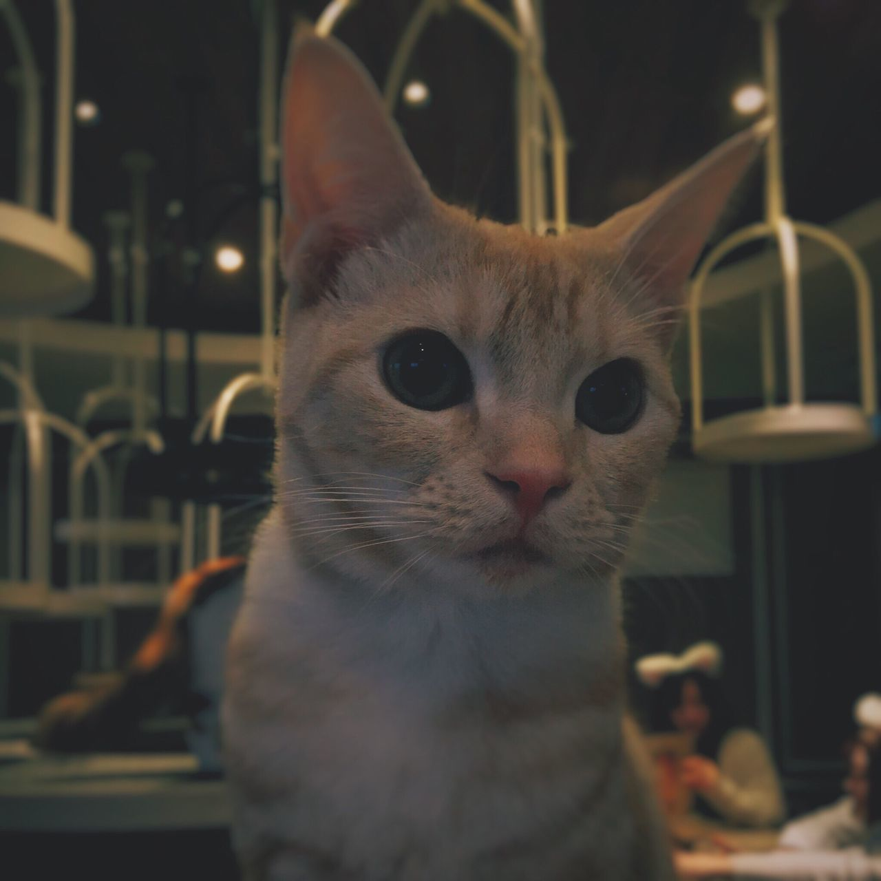 Cat One Animal Animal Themes Portrait Looking At Camera Close-up VSCO Eyem Best Shots Mobilephotography Domestic Animals