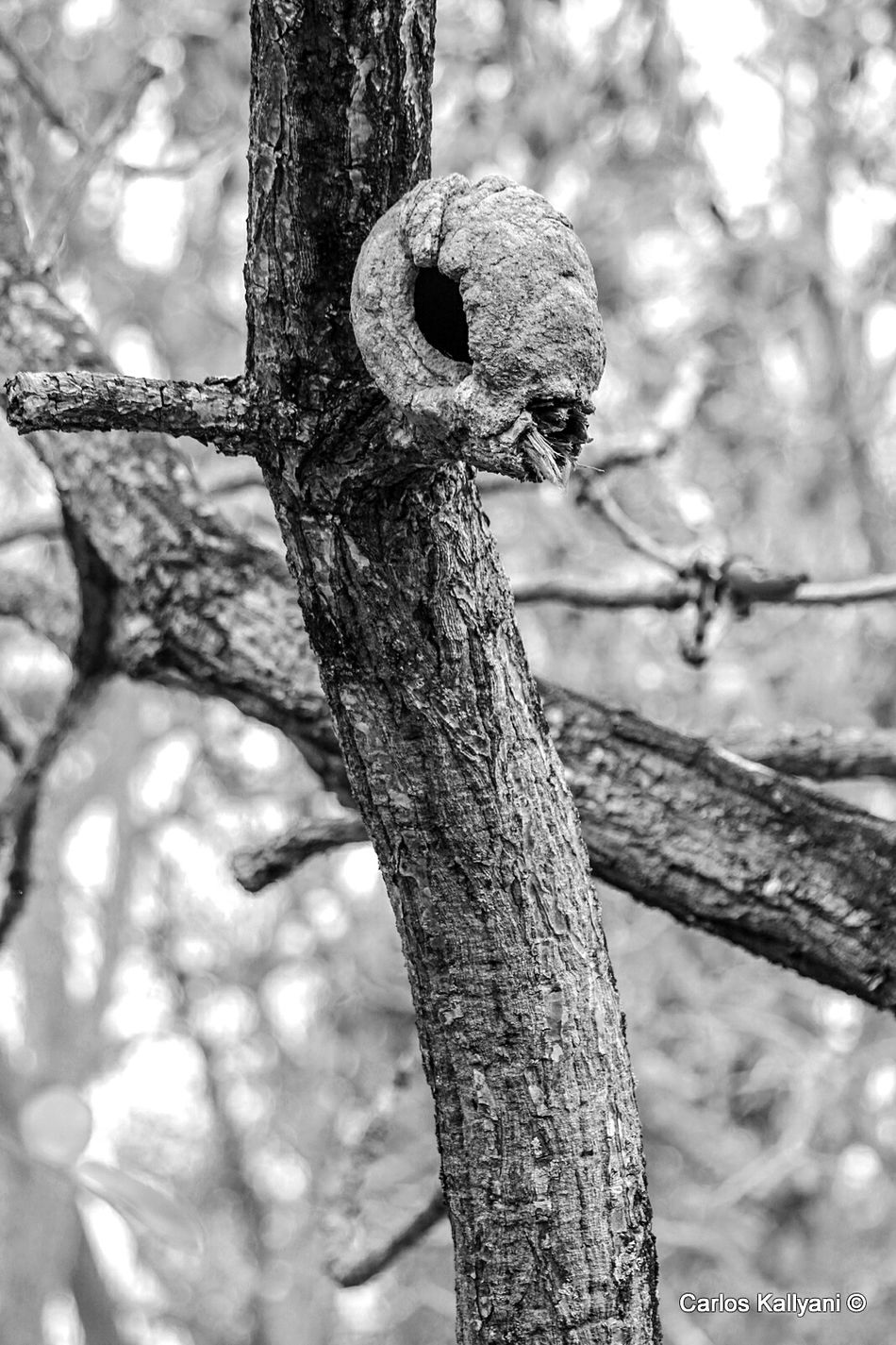 E.T. Tree Beauty In Nature ET Fotografia Brasília - Brazil Fotoartistica Fotoart Photography Foto Photo Fotoartegram Brasília No People Fotoarte