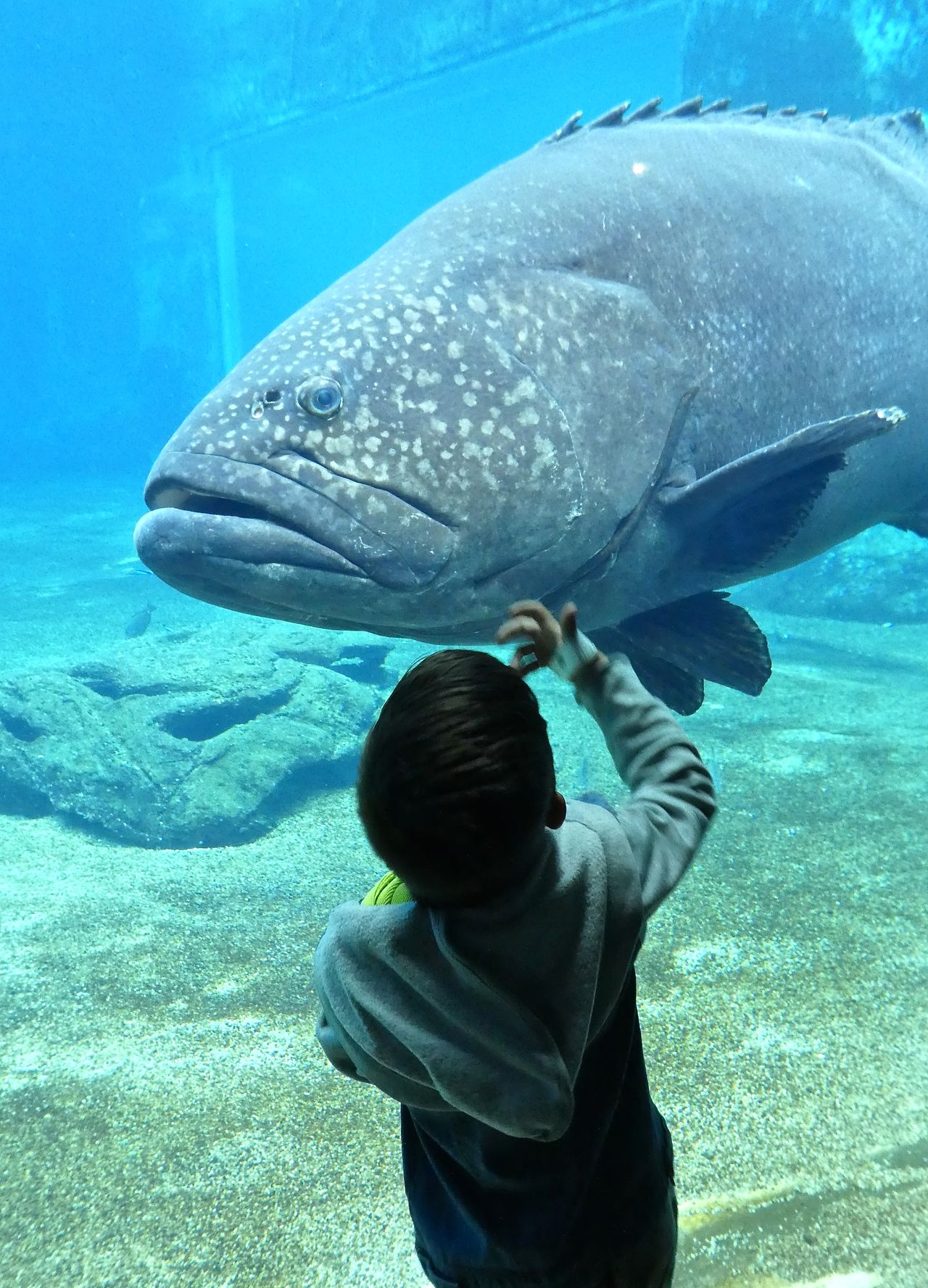 Animal Themes Aquarium Beauty In Nature Big Fish Boy Childhood Discovery Fisch Fish Indoors  Junge One Person People Real People Rear View Sea Life UnderSea Underwater Water