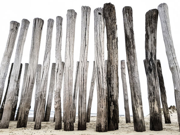 Clear Sky Lines Low Angle View Nature Wood Arrangement Beach Beachphotography Day In A Row Large Group Of Objects Lines And Shapes Old Wood Outdoors Pole Repetition Sand Structure Structure And Nature Structures Structures & Lines White Background Wood - Material The Week On EyeEm