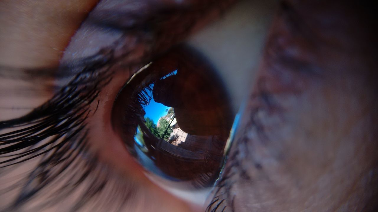 sensory perception, human body part, eyelash, one person, real people, human eye, selective focus, eyesight, close-up, eyeball, outdoors, day, iris - eye, mammal, animal themes, people