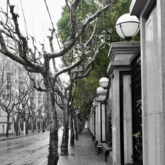Streetlevel StreetScenes Green Peaceful Cold Wet Leading