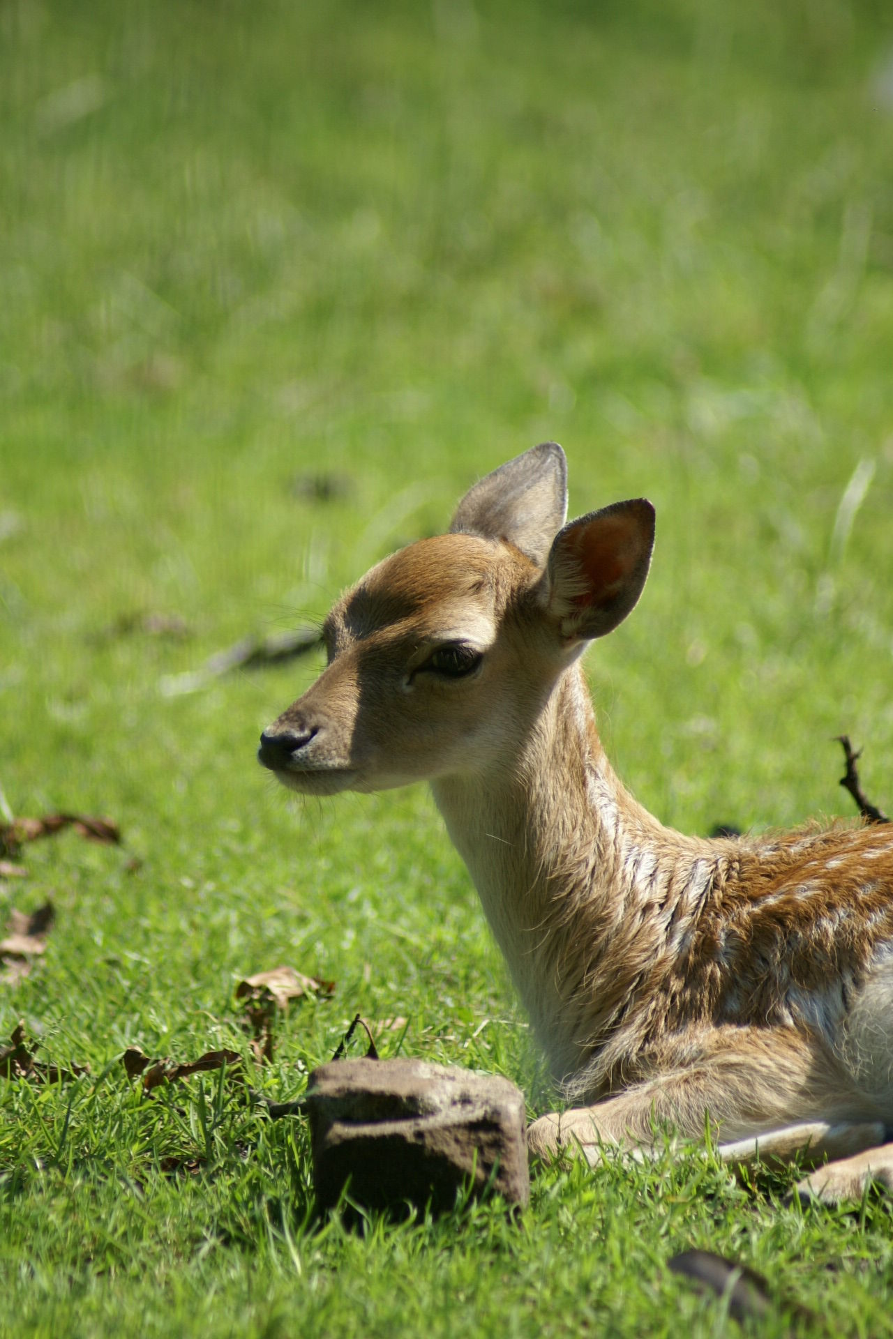 Beautiful stock photos of deer, Animal Head, Animal Themes, Animals In The Wild, Day