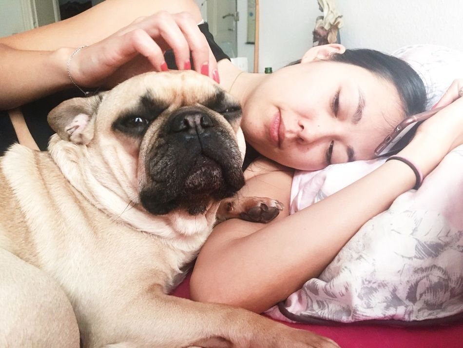 Krispy kirsty and humongous hugo Pets One Animal Dog Domestic Animals One Person Portrait Indoors  Mammal Togetherness Person Pug People Adult Horizontal Close-up Young Adult Day Human Body Part Cuddles Cuddling Frenchbulldog Bed DogPerson Together Forever Bonding