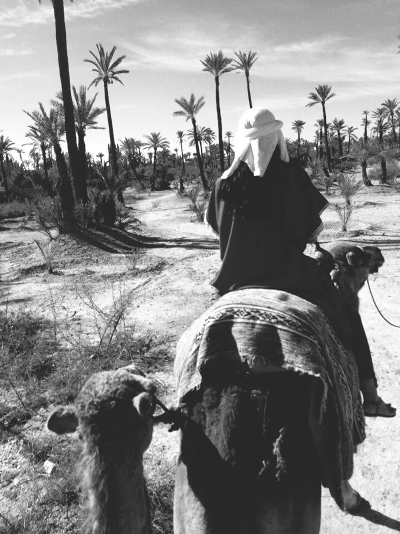 Marruecos Domestic Animals Horse Mammal Rear View One Animal Real People Tree Working Animal Field Palm Tree Day One Person Livestock Sky Men Outdoors Nature Women