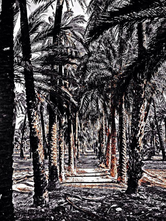 Palm Trees Sunshine