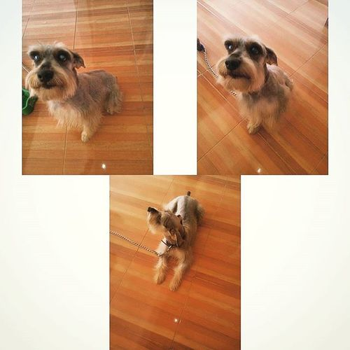 Alguien quedo muy guapo... Cosmo Amigo De Vida Amigodevida Guapo Instadog Selfiedog Instaselfie Dogs Look Galan Tagsforlikes Tags Instatags Like4like Likeforlikes Mondays Friend Mi Bestfriend