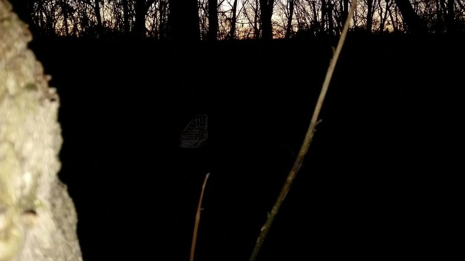 No People Tree Day Outdoors Nature Eyem Best Shots Nature_collection EyeEm Photoshoot Photography Plant Taking Photos Photography Themes Photo Photoart Branch Landscape Beauty In Nature Sunset Tree Bare Tree Tranquil Scene Growth Relaxing Night Nature