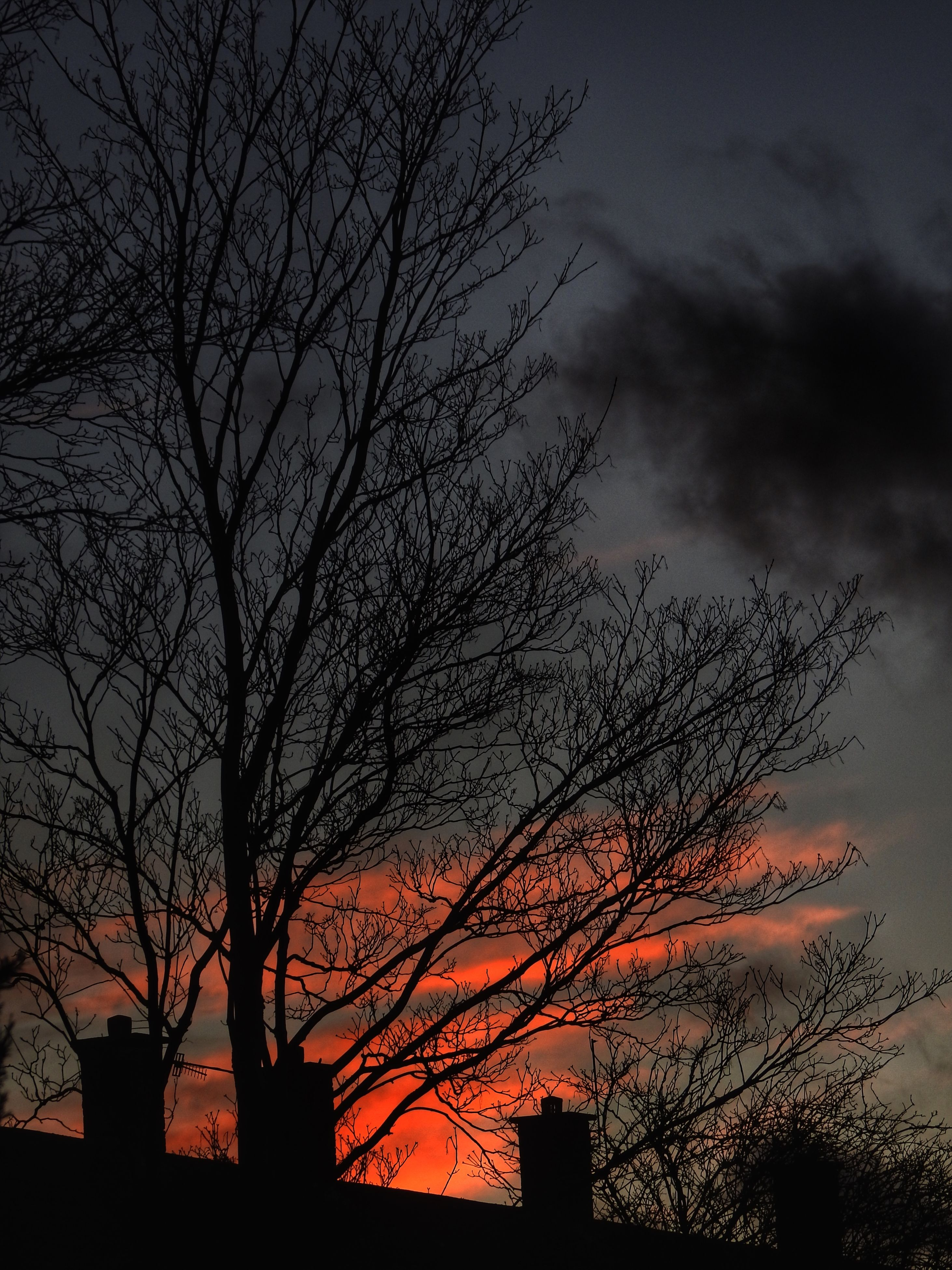 silhouette, bare tree, sunset, tree, sky, low angle view, branch, cloud - sky, beauty in nature, nature, built structure, tranquility, scenics, architecture, building exterior, dusk, orange color, cloud, outdoors, growth