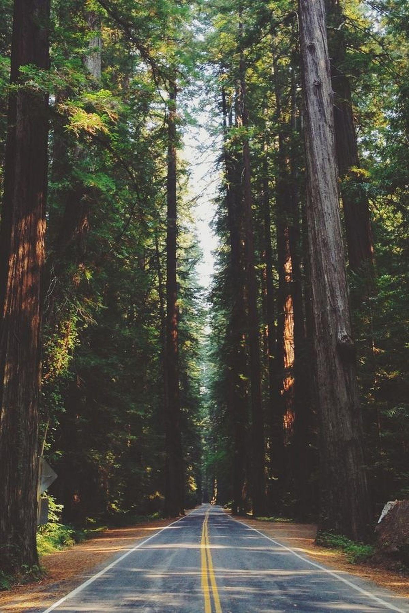 Wanderlust, I am Sights Seeking Adventure Get Lost Space