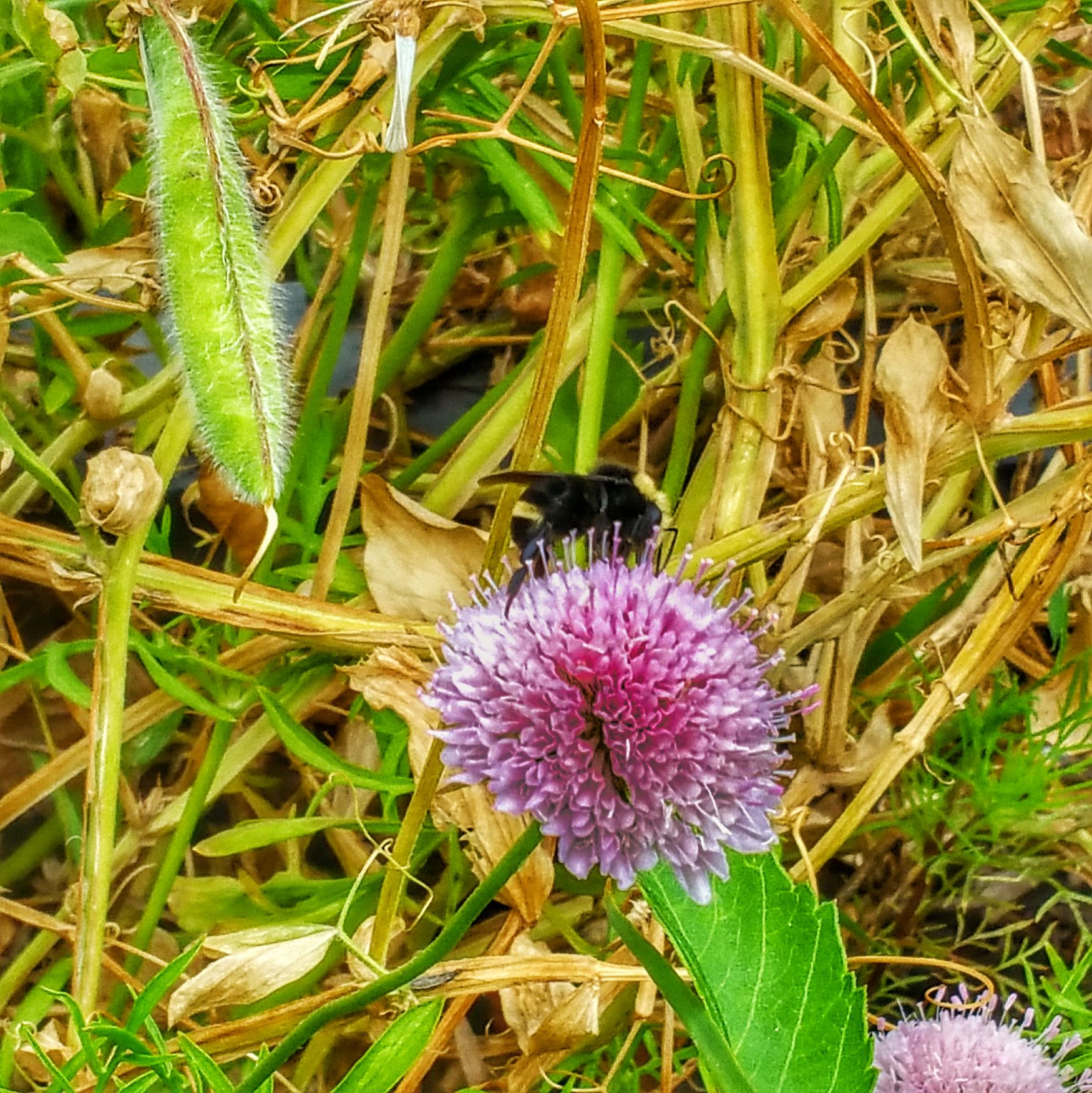 Bee scene Flower Insect Plant Flower Head Beauty In Nature Purple Green Color