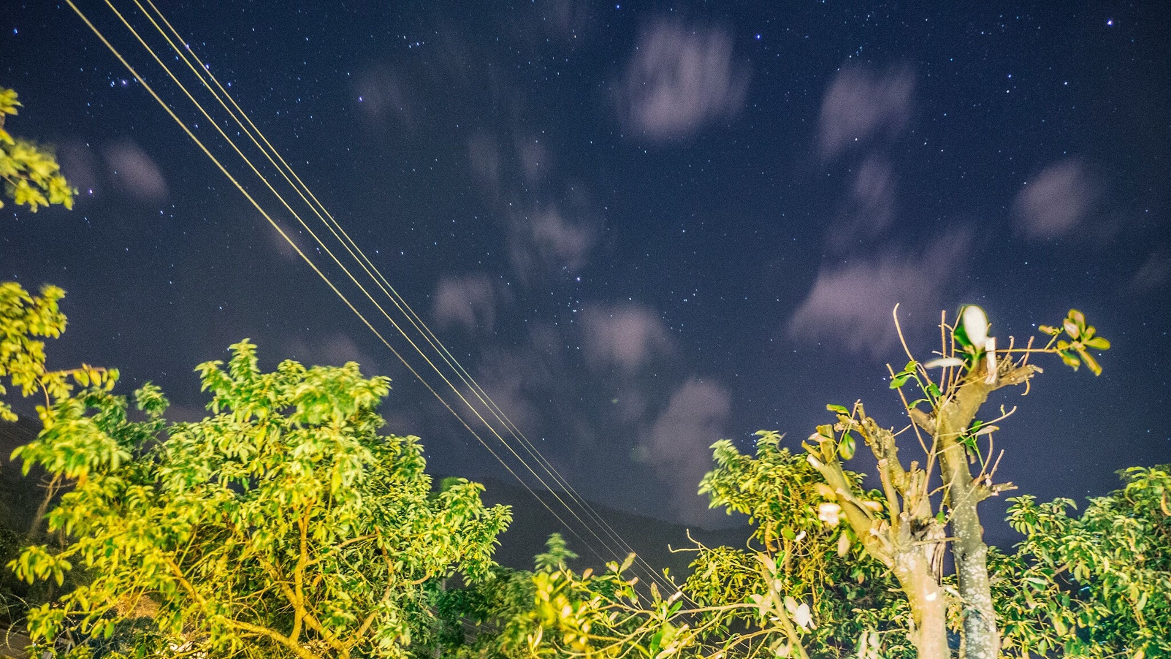 night, tree, low angle view, sky, nature, beauty in nature, star - space, tranquil scene, tranquility, scenics, growth, star field, connection, star, green color, astronomy, outdoors, plant, idyllic, no people
