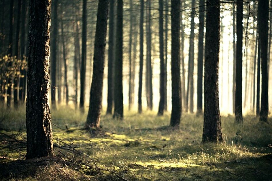No People Day Forest Tree Nature Tree Trunk Green Color Scenics Beauty In Nature WoodLand Wheat Sky Night Nocity