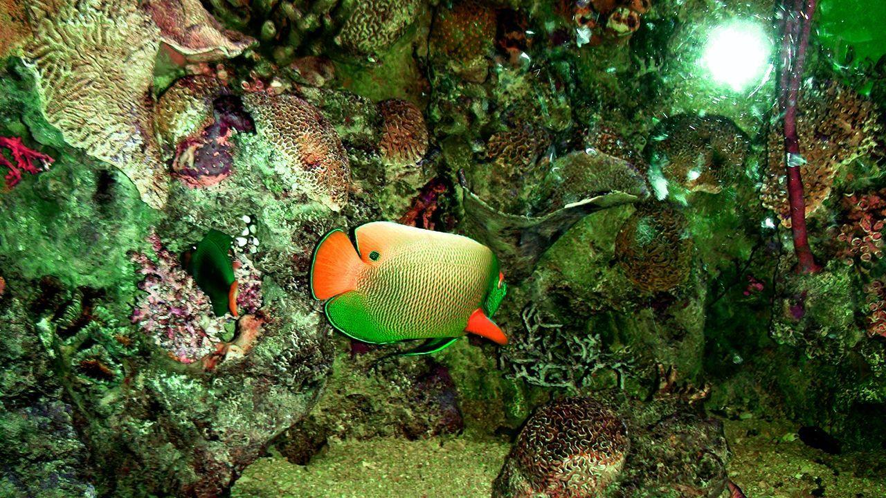 Beautiful Fish Beauty Under The Sea Colorful Fish Deep Sea World Exotic Fish Fish World Special Fish Strange Fish