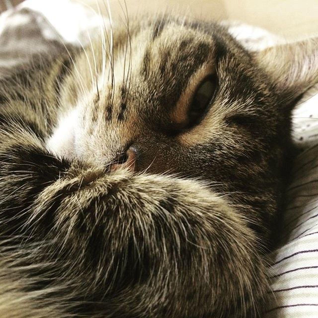 моесчастье Cat Pet Sleep