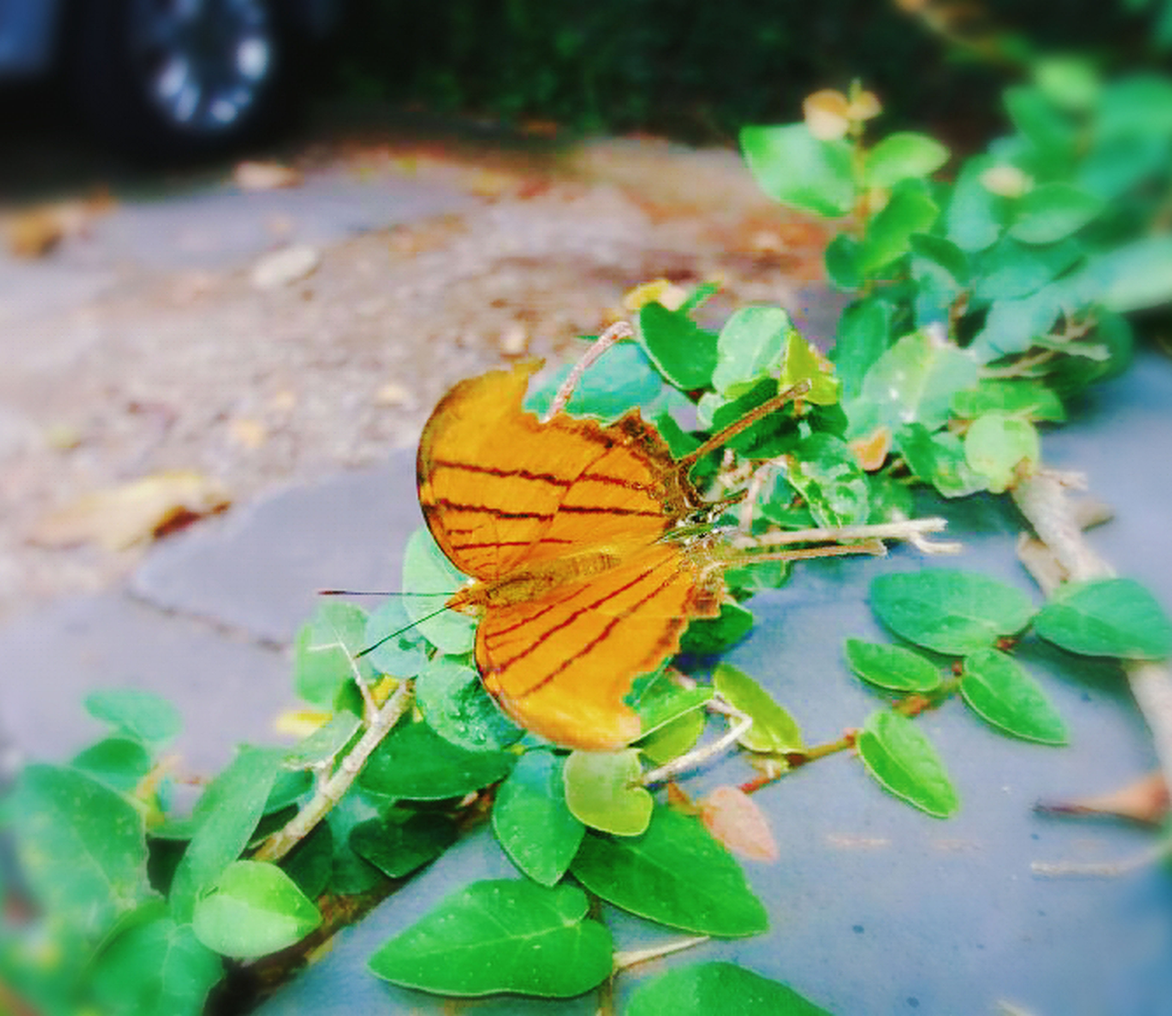 leaf, insect, butterfly - insect, one animal, animal themes, animal wing, nature, change, close-up, animals in the wild, plant, outdoors, autumn, no people, fragility, beauty in nature, day, leaves