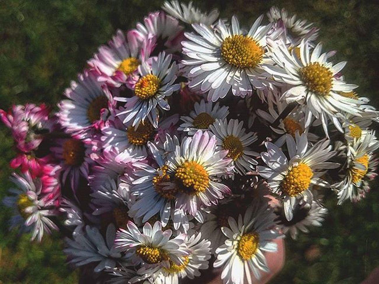 💐🌸💐🌸💐 Stokrotka Stokrotki Wiosna Bukiet Kwiaty Daisies Daisy Spring Bouquet Flowers