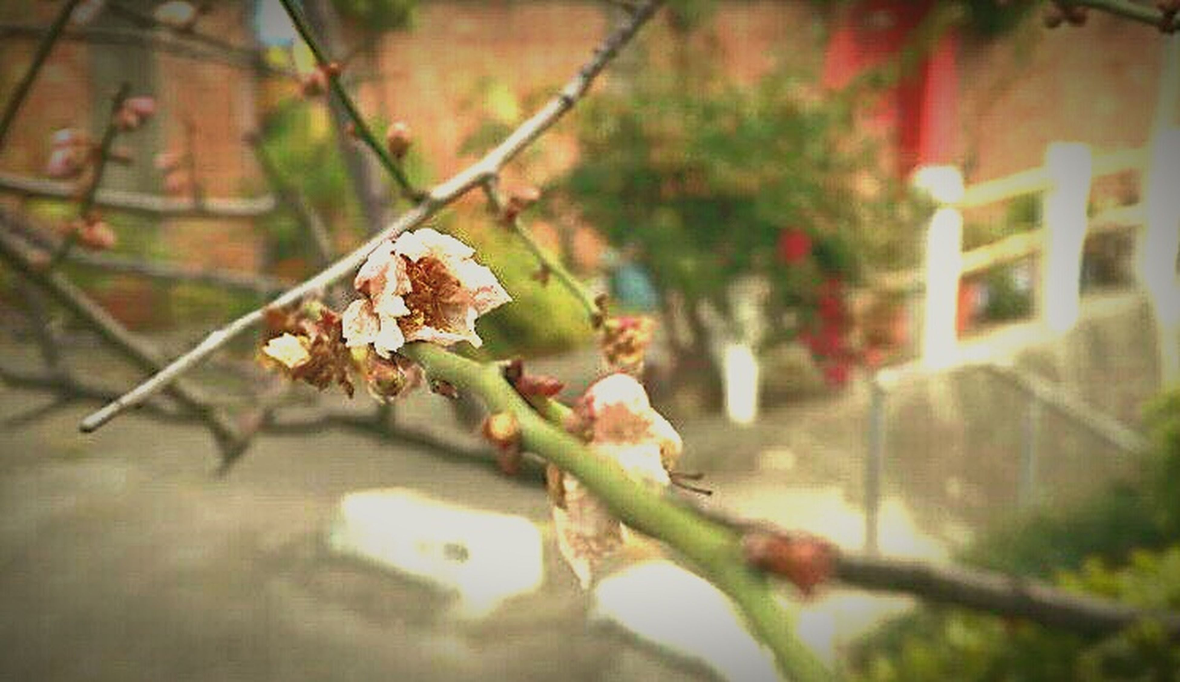 focus on foreground, leaf, close-up, selective focus, autumn, dry, plant, nature, outdoors, branch, day, no people, built structure, twig, growth, change, season, wall - building feature, architecture, leaves