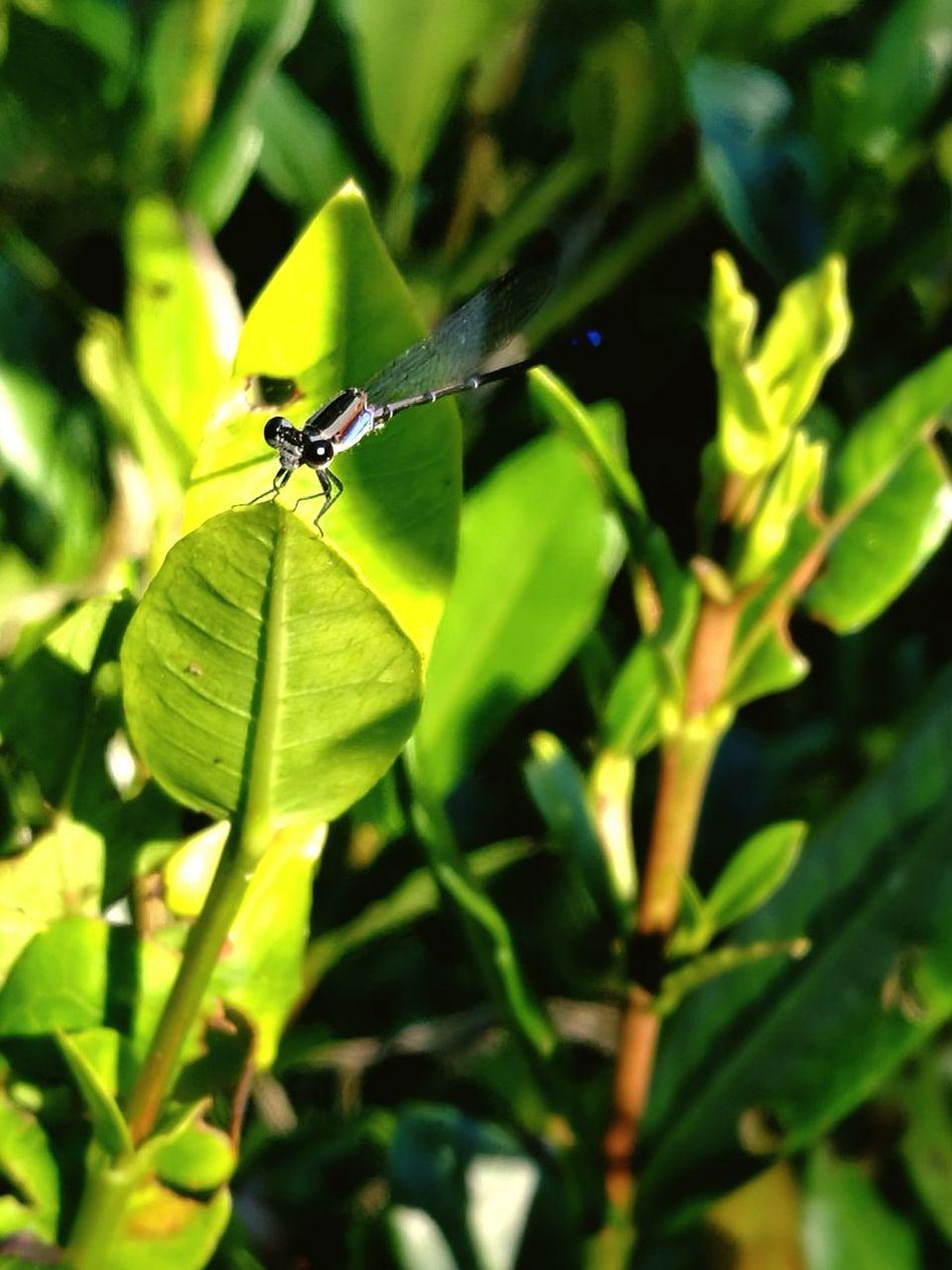 Insect Zygoptera Beautiful Nature