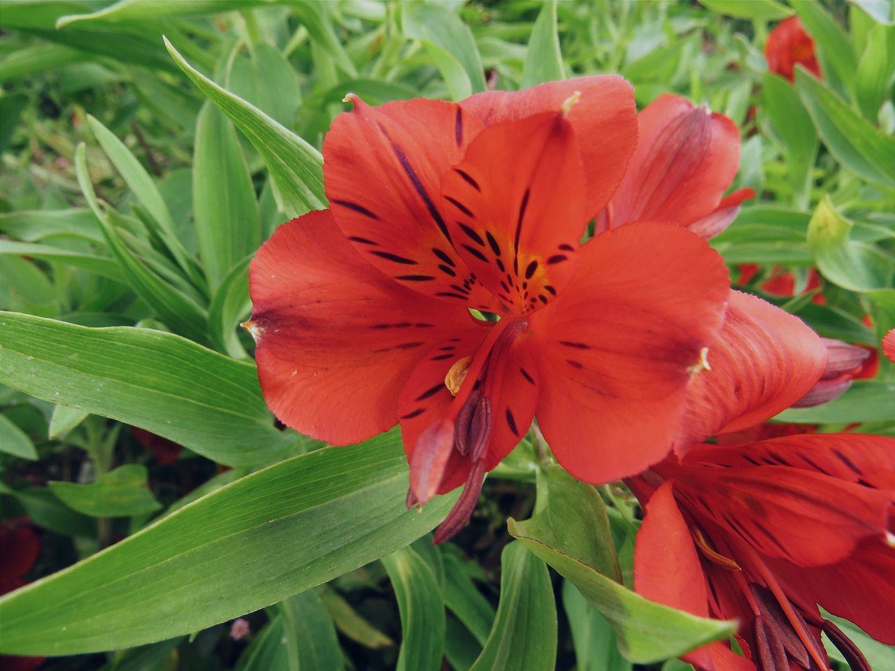 Solitaria!! Vscodaily Vscoflower Vscogood Flowerporn Flor