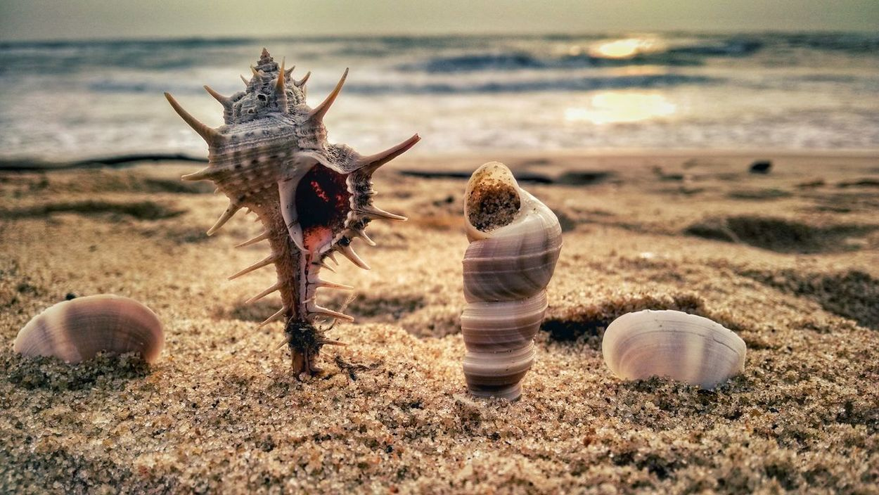 Playing with shells.. 500th post 😍🙌 .. milestone reached.. thank you everyone for the support and inspiration😉😊 it has been a beautiful journey with my mobile camera as the primary one 😍 hope to continue the same 😊😊 .. 500thpost Shells Design Arrangement Beachphotography Sand Four Photooftheday Life Is A Beach Chennai No People South India Popular Photos Tadaa Community Tamilnadu Good Morning Mobilephotography Creativity Seascape Nature_collection Sunrise Seashells Bay Of Bengal EyeEm Best Edits Sunlight