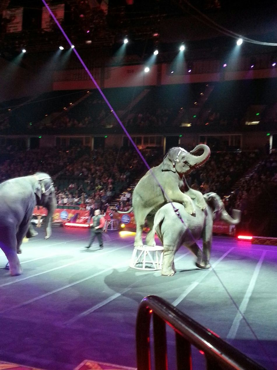 Elephants Circus Ringling Bros