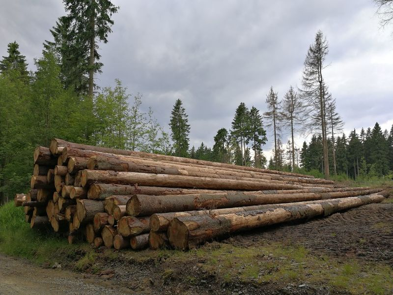 Stack Timber Log Lumber Industry Deforestation Woodpile Tree Wood - Material Environmental Issues Heap Pinaceae Large Group Of Objects Cloud - Sky Nature Fuel And Power Generation Day No People Outdoors Forestry Industry Sky